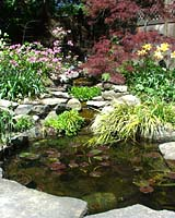 In early May the pink flowers of `Olga' rhododendron and the bright red leaves of `Crimson Queen' Japanese maple frame the waterfall that spills into the small pond in our backyard. Stone slabs at the bottom of the photograph separate the pond from our patio.