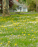 Though it may be tempting to apply weed killers in the spring when weeds are blooming, fall applications are more effective.