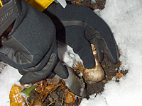 It may not be comfortable, but bulbs can be planted until the ground freezes.