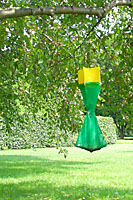 Japanese beetle traps can attract beetles from miles around, so do not put them in your yard!