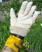 A cotton glove saturated with a herbicide can we used to control weeds growing next to desirable plants.