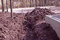 Even shallow excavation can damage tree roots as they grow within a foot of the soil surface and outward 50 to 100 feet or more from the trunk!