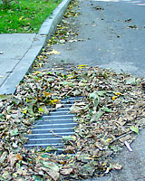 Leaves that are raked to the curb are often washed into catch basins before they can be collected.