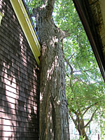 This incidental tree is literally crushing the corner of this garage!