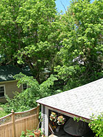 Left to grow for many years, incidental trees provide privacy in neighborhoods featuring small lots.