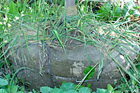 Weeds transported in the rootballs of trees and shrubs are a common source of weed infestations.