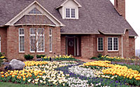 "Thousands of daffodils, grape hyacinth, tulips and striped squill create a ""river"" of color leading to the front door of this Town of Manlius residence."