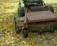 Don't stop mowing until your lawn stops growing - which could be the middle of November in some years!